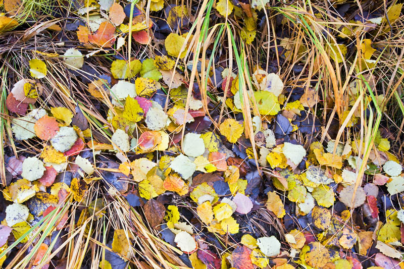 Autumn leaves and grass TB 0915
